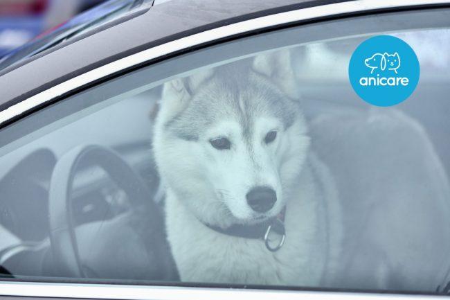 Hilfe! Fremder Hund im heißen Auto – Was tun?