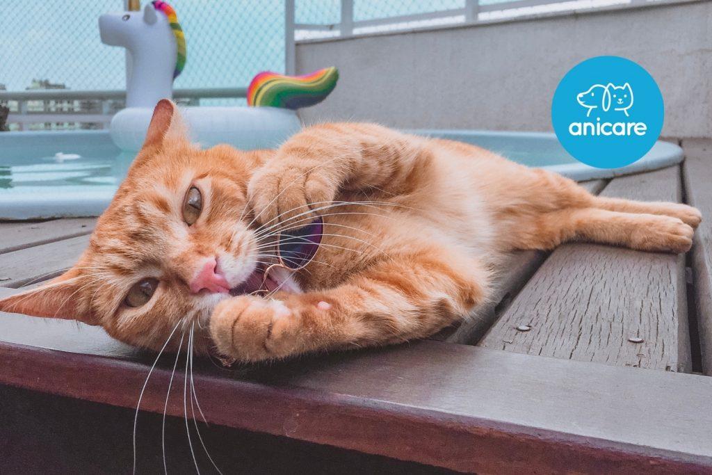 Wie du deine Katze gut durch den heißen Sommer bringst