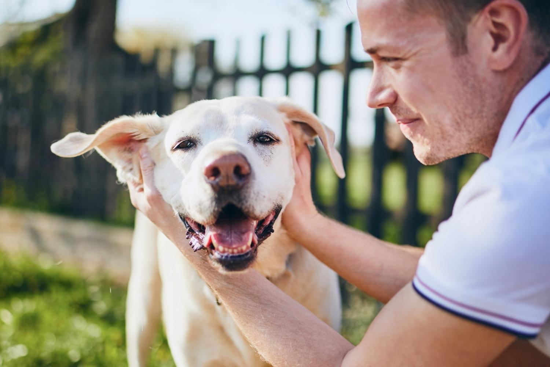 Hund und Besitzer