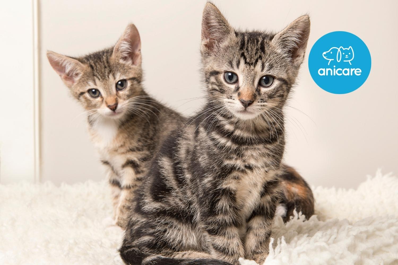 Tipps und Tricks für eine Katzenadoption