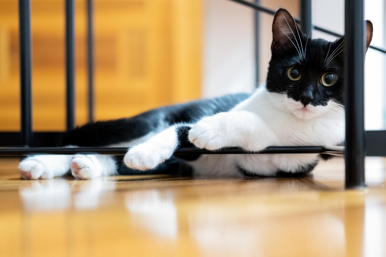 Katze liegt auf Boden