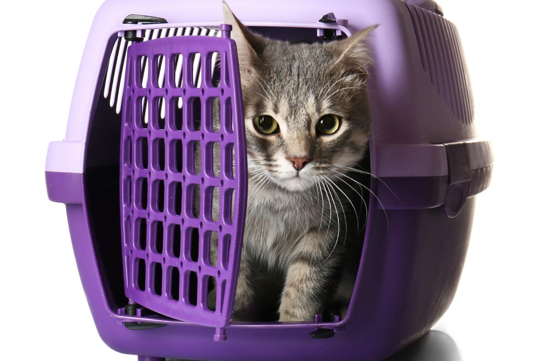 Katze in Katzenbox
