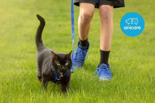 Spazieren mit der Katze – Was ist zu beachten?