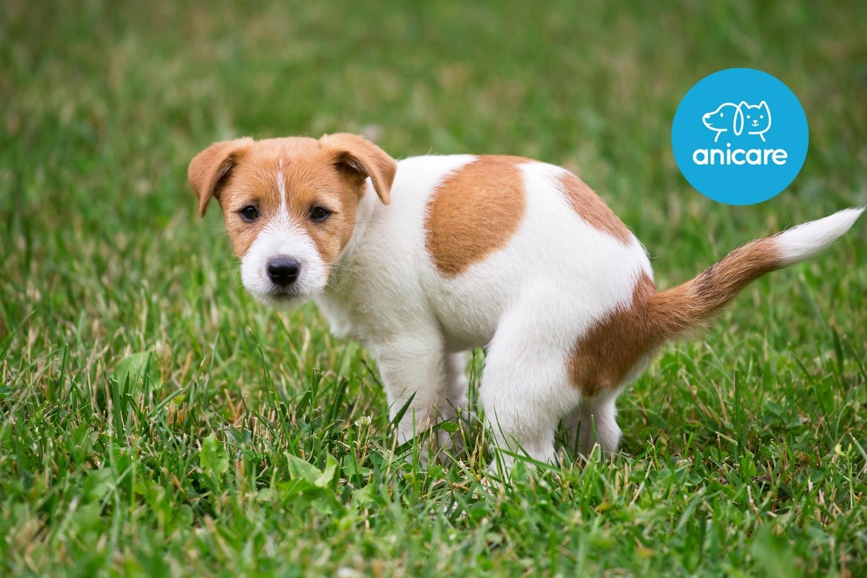 Durchfall bei Hunden – harmlos oder gefährlich?