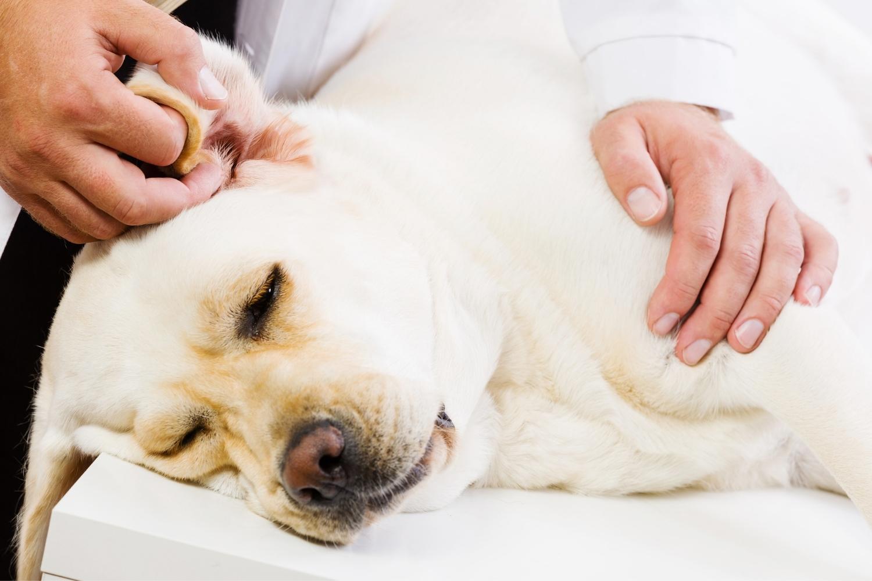 Kranker Hund wird gestreichelt