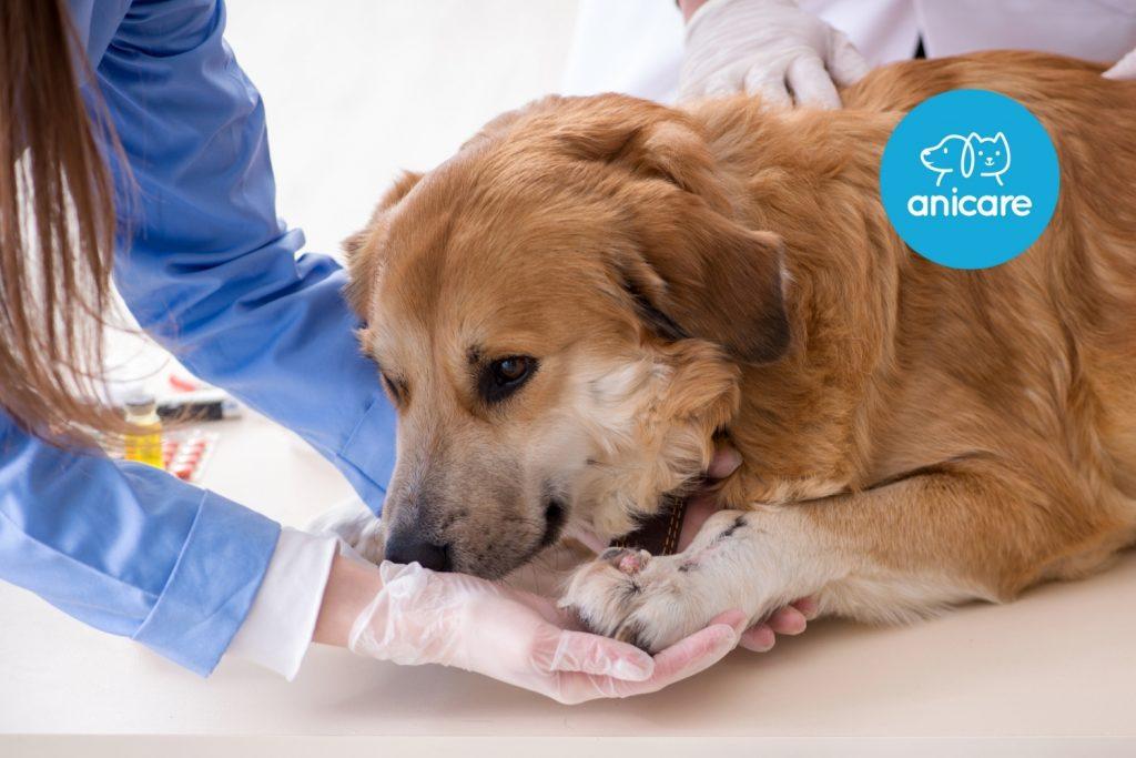 Epilepsie beim Hund – wenn es im Kopf gewittert