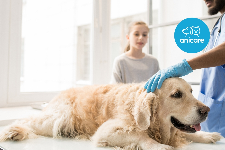 Würmer bei Hunden: lästig bis gefährlich
