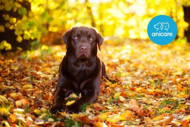 Hunde im Herbst: Was musst du beachten?