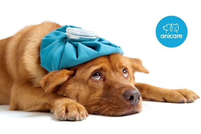 Schnupfen beim Hund – Was tun bei einer Erkältung?