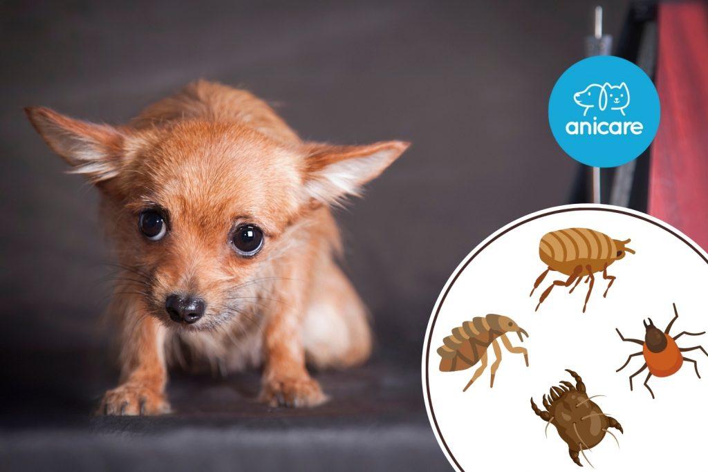 Diese Hunde-Parasiten sind im Herbst aktiv